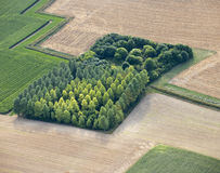 Aerial View : isolated wood in fields Stock Photography