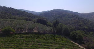 Aerial view of the Italian vineyards stock video