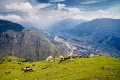 Aerial view of the Kullu valley with horses in the foreground Stock Images