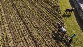 Aerial view, Labour Vineyard with a draft horse, Saint-Emilion-France. Europe stock images