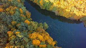 Aerial view on the lake and autumn tree forest.  royalty free stock photography
