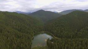 Aerial view of Lake Synevir in Carpathian Mountains in Ukraine stock video