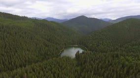 Aerial view of Lake Synevir in Carpathian Mountains in Ukraine stock video footage