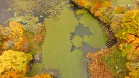 AERIAL VIEW. Lake And Trees In Bright Autumn. AERIAL VIEW. Beautiful scenery over picturesque terrain with lake covered with moss and many trees in bright autumn stock footage