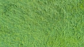 An aerial view of a large patch of some freshly cut, healthy, green grass. royalty free stock photo