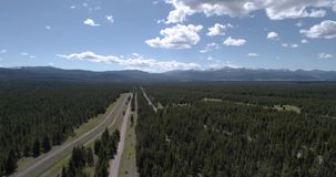 Aerial view of large pine forest 4k 24fps stock video