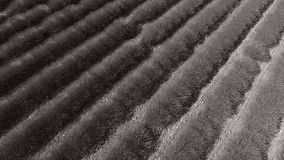 Aerial view of lavender field. Lavender Fields of Provence, France, close-up view seen from above, drone view. Valensole Plateau stock video