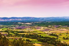 Aerial view the lavender fields in Provence Royalty Free Stock Photo