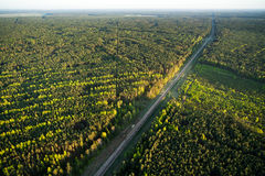 Aerial view of Lithuanian forest Stock Photography