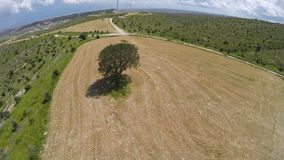 Aerial view of lone tree in the field, symbol of fertility, vital spark, wisdom. Stock footage stock footage