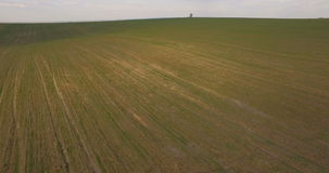 Aerial view, Lonely tree in the middle of the field, background. Lonely tree in the middle of the field stock video footage