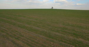 Aerial view, Lonely tree in the middle of the field, background. Aerial view, Lonely tree in the middle of the field stock footage