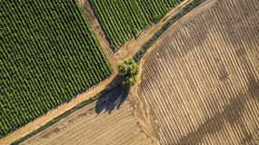 Aerial view of lonely tree in the middle of a field Stock Photos