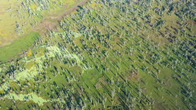 Aerial View of Louisiana Swamp stock photos