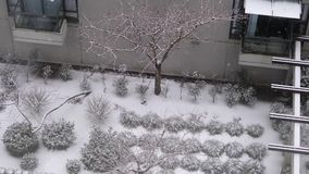 Aerial view of low rise apartment and small tree during cold blizzard snow. Winter day stock video