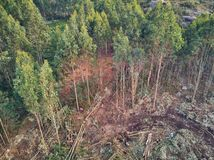 Aerial view of lumberjacks cutting trees in the forest royalty free stock photography
