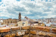 Aerial view of Malaga in a beautiful summer day, Spain stock photography