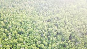 Aerial view of mangrove forest canopy. A vast mangrove forest grows along the edge of Pulau Lembata, Indonesia. This beautiful region harbors amazing reefs and a stock video