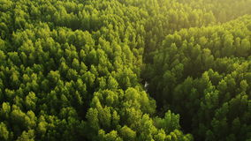 Aerial View. Mangrove forest in Krabi province, Thailand stock video