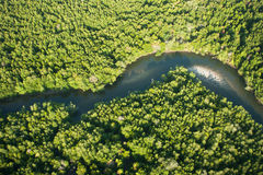 Aerial view of mangrove forest and river Stock Photography