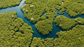 Mangrove forest in Asia. Philippines Siargao island. Aerial view of mangrove forest and river on the Siargao island. Mangrove jungles, trees, river. Mangrove Royalty Free Stock Photography
