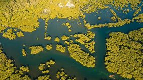 Mangrove forest in Asia. Philippines Siargao island. Aerial view of mangrove forest and river on the Siargao island. Mangrove jungles, trees, river. Mangrove Royalty Free Stock Photos