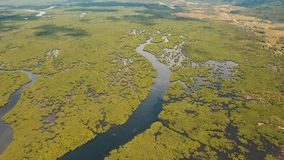 Mangrove forest in Asia. Philippines Siargao island. Aerial view of mangrove forest and river on the Siargao island. Mangrove jungles, trees, river. Mangrove Royalty Free Stock Image