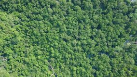Aerial View of Mangrove Forest. Top View of Pa Phru Tha Pom Khlong Song Nam Park in Krabi, Thailand. Shot with a DJI Mavic fps29,97 4k stock footage