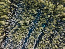 Aerial view of Melaleuca tree forest stock photo