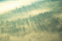 Aerial view of misty forest, VT Royalty Free Stock Photos