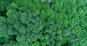 Aerial view of the mixed woods and the alpine meadows stock footage