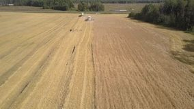 Aerial view modern combines gather wheat and throw straw. Pictorial aerial view modern combines gather wheat and throw straw making dust cloud on harvested field stock video footage
