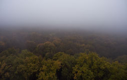 Aerial view. Morning fog over the forest Stock Images
