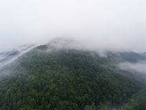 Morning fog over the forest in mountain. Stock Photography
