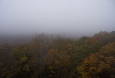 Aerial view. Morning fog over the forest. Stock Photography