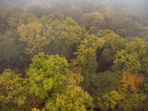 Aerial view. Morning fog over the forest. Royalty Free Stock Image