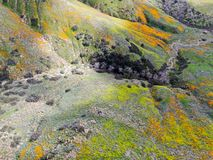 Aerial view of Mountain with California Golden Poppy and Goldfields blooming in Walker Canyon, Lake Elsinore, CA. USA. Bright orange poppy flowers during royalty free stock images