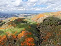 Aerial view of Mountain with California Golden Poppy and Goldfields blooming in Walker Canyon, Lake Elsinore, CA. USA. Bright orange poppy flowers during royalty free stock photo