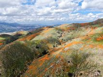 Aerial view of Mountain with California Golden Poppy and Goldfields blooming in Walker Canyon, Lake Elsinore, CA. USA. Bright orange poppy flowers during royalty free stock photos