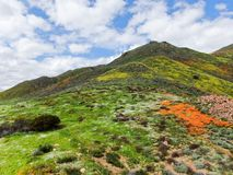 Aerial view of Mountain with California Golden Poppy and Goldfields blooming in Walker Canyon, Lake Elsinore, CA. USA. Bright orange poppy flowers during stock image