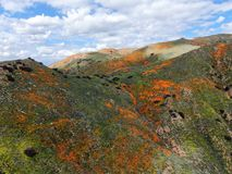 Aerial view of Mountain with California Golden Poppy and Goldfields blooming in Walker Canyon, Lake Elsinore, CA. USA. Bright orange poppy flowers during stock photography