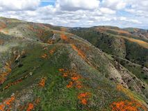 Aerial view of Mountain with California Golden Poppy and Goldfields blooming in Walker Canyon, Lake Elsinore, CA. USA. Bright orange poppy flowers during stock photos