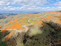 Aerial view of Mountain with California Golden Poppy and Goldfields blooming in Walker Canyon, Lake Elsinore, CA. USA. Bright orange poppy flowers during stock photo