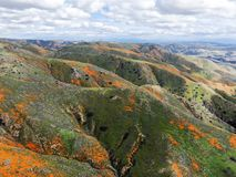 Aerial view of Mountain with California Golden Poppy and Goldfields blooming in Walker Canyon, Lake Elsinore, CA. USA. Bright orange poppy flowers during royalty free stock image