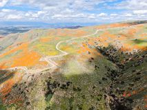 Aerial view of Mountain with California Golden Poppy and Goldfields blooming in Walker Canyon, Lake Elsinore, CA. USA. Bright orange poppy flowers during stock images