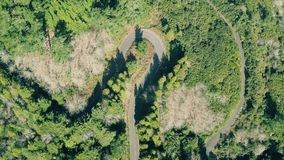 Aerial View of the Mountain Evergreen Forest with Road stock video footage