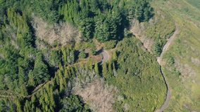Aerial View of the Mountain Evergreen Forest with Road stock video