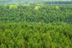 Aerial view of a mountain forest Stock Photo