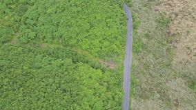 Aerial View Mountain Road among Green Tropical Jungle stock footage