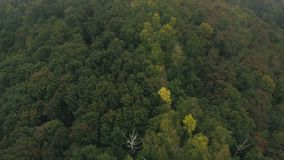 Aerial view on mountain road in the woods stock video